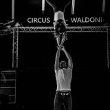 acrobatics in the circus